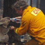 Всесвітній фонд дикої природи провів свою оцінку кількості диких тварин, що загинули на пожежах в Австралії